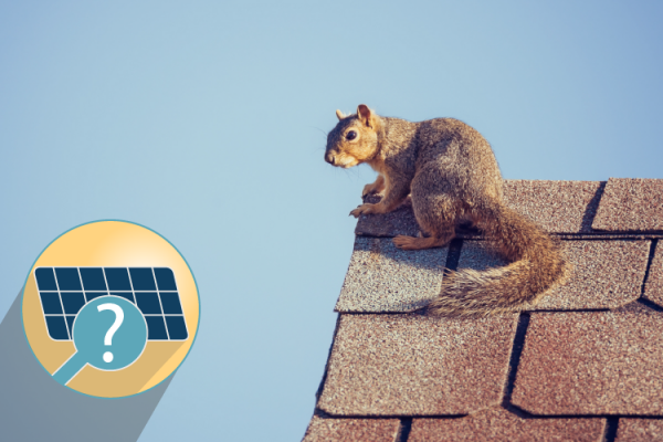 Do I need snow & critter guards for my solar panels?